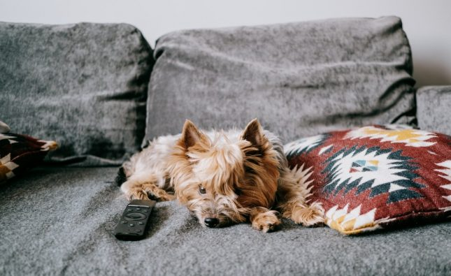 What Are Yorkies Scared Of?